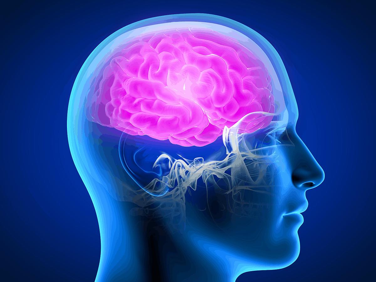 3D rendering of brain in skull